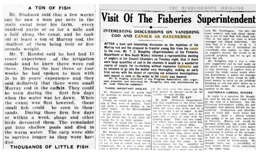 Newspaper clippings discussing the loss of fish from rivers in NSW.